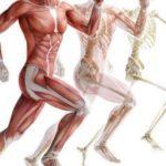 Какие мышцы работают при беге — тренировка с точки зрения физиологии