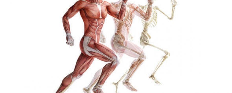 Какие суставы и работают при беге посттравматическая плечевого сустава
