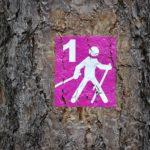 Польза скандинавской ходьбы с палками
